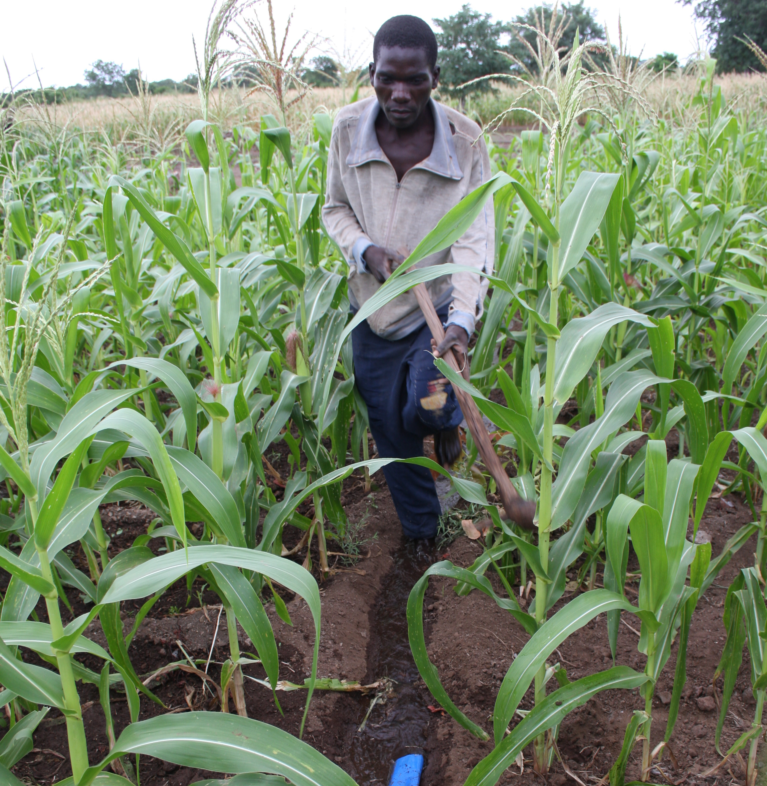 People and ploughs: from Scotland to Malawi